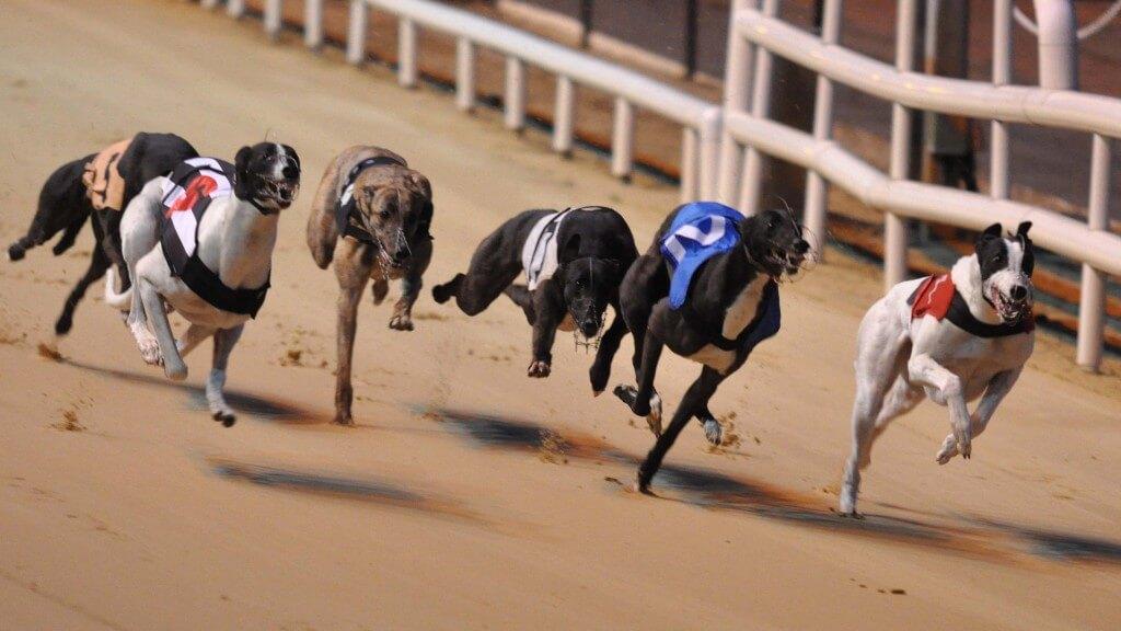 greyhound racing at the kilkenny dog track