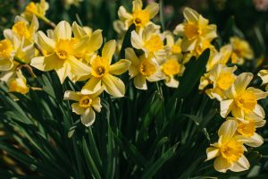 Family Spring Activities in Kilkenny, Kilkenny Activity Centre